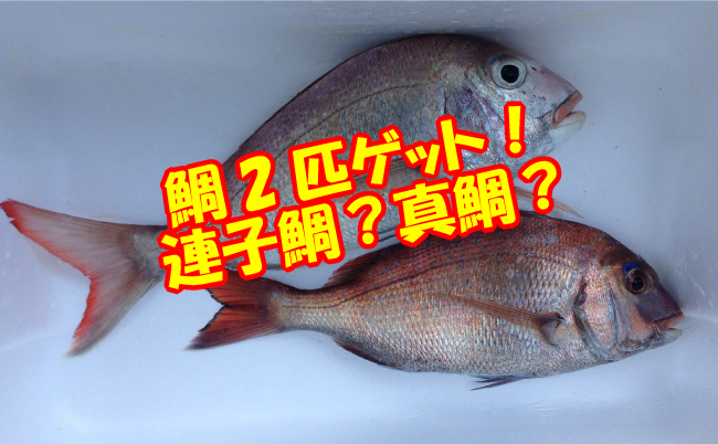 鯛釣りの結果